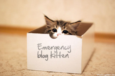 This one is for Justine and Maura.  thefrogman:  For blogging emergencies only.