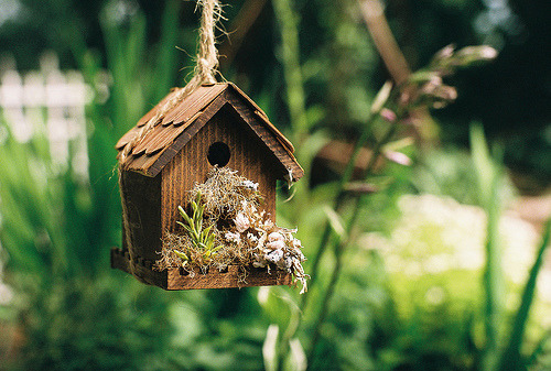 Birdhouse, complete with landscape.