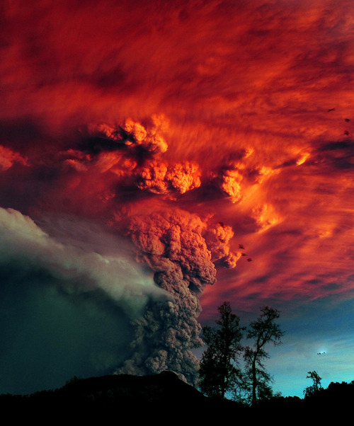Volcano Erupts in Chile, Boston Big Picture A cloud of ash billowing from Puyehue volcano near Osorno in southern Chile, 870 km south of Santiago June 5. Puyehue volcano erupted for the first time in half a century on June 4 prompting evacuations for 3,500 people as it sent a cloud of ash that reached Argentina. The National Service of Geology and Mining said the explosion that sparked the eruption also produced a column of gas 10 kilometers (six miles) high, hours after warning of strong seismic activity in the area.