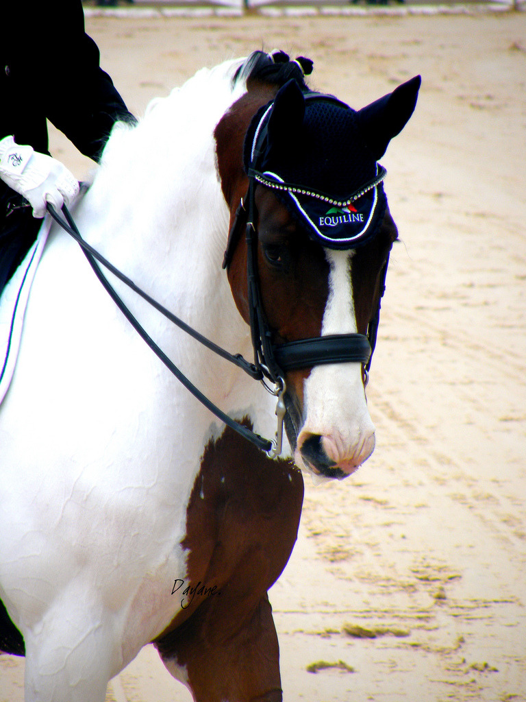 breee07:  How gorgeous is this horse!?