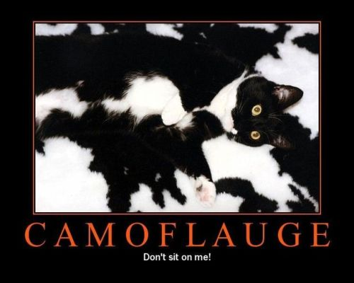 Camoflauge Cat :)