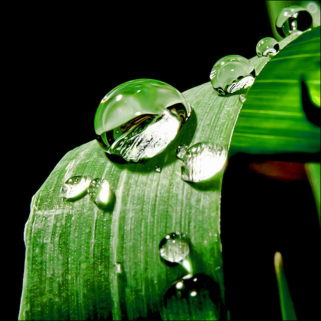 ~ Grass Drops ~ by ViaMoi on Flickr.