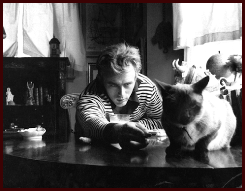 withnailrules:  James Dean pictured with Marcus, a Siamese cat who was a gift from Elizabeth Taylor.