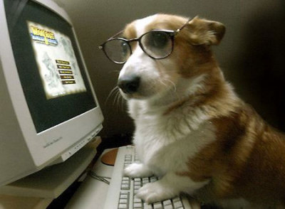 Nobody knows you're a Corgi on the internet…