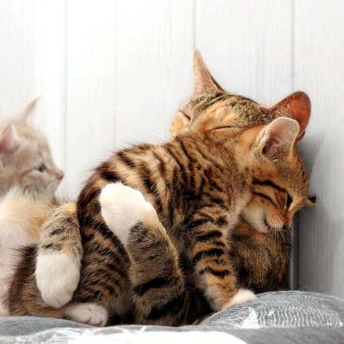 A Mother's Hug