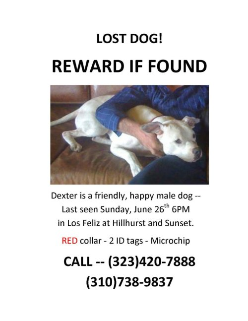 "LOST DOG - URGENT!  Dexter escaped from his yard last night in Los Feliz (Los Angeles), CA. Time is of the essence and the first 24 hrs are the most crucial. We need a search party out there tonight to hang flyers, talk to people, and look for Dexter.  If you are able to meet, please email info@KarmaRescue.org . Thank you! ********************************************************************************* 6/28/11 - Update from Karma Rescue : ""We are happy to announce that Dexter is home and safe. We'd like to thank everyone who aided in the search. We truly have the BEST volunteers!"" *********************************************************************************"