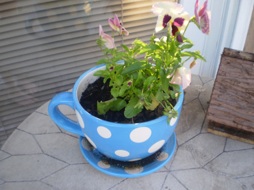 fuckyeahilovetea:  A tea pot. Hahaha. :)