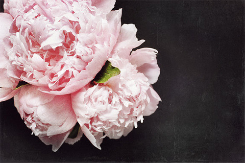 PEONIES + CHALKBOARD (by LoveMissB) So, I've been watching waaay to much Gossip Girl in the past few days (what? it's summer and I'm bored and on vacation and don't judge me), and because of that I seem to have developed a deep craving for colourful coats and peonies. I have a few coats, and it's too hot for them anyway, but, unfortunately, peonies are impossible to get. I've prowled all the flower shops I know, and nothing. No peonies anywhere to be fond :(