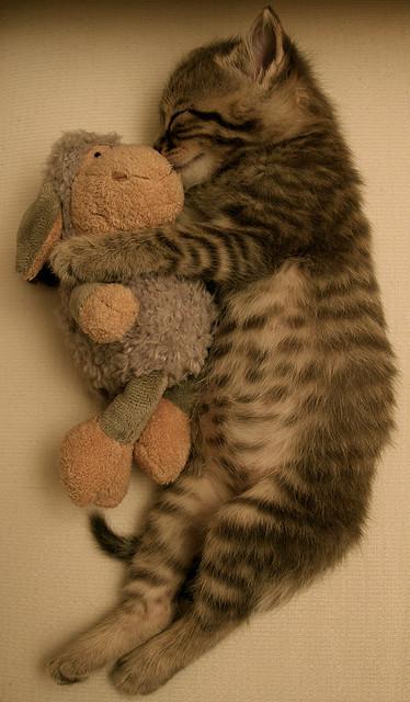 sleeping beauty by Ebru Özcan Akın on Flickr.