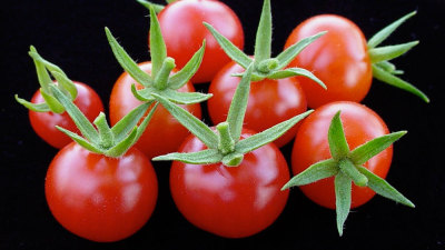 "nprfreshair:  How Industrial Farming Destroyed the Tasty Tomato …and why we're partially responsible, says Barry Estabrook: ""It's  the price we pay for insisting we have food out of season and not   local. We foodies and people in the sustainable food movement  chant  these mantras 'local, seasonable, organic, fair-trade,  sustainable' and they almost become meaningless because they're said so  often and  you see them in so many places. If you strip all those away,  they do  mean something, and what they mean is that you end up with  something like a Florida tomato in the winter — which is tasteless."""