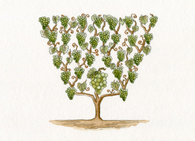 maisonkrug:  The Krug family tree. Illustration by  Laurence Jaccottet.