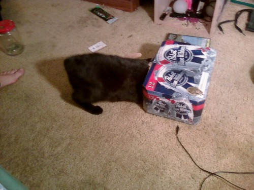 get out of there cat. that 12 pack you are investigating cost less that the food you eat. and i need the beer is to help me cope with this fact.