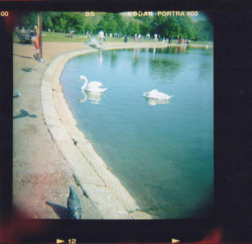 Hyde Park, London. Taken with a Diana F+.