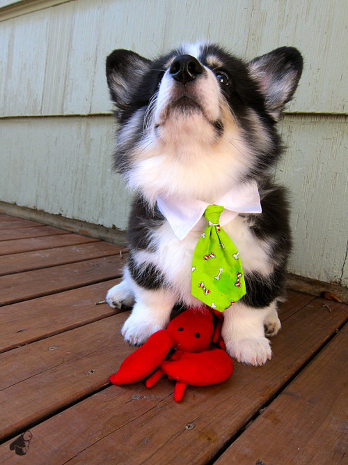dogs and ties! (via poopster)