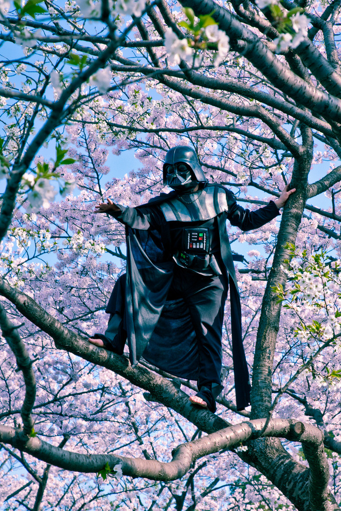 Sakura Vader on Flickr. Sakura season is loved by everyone. And in 2010 when the sakura finally bloomed people as is customary filled the parks for hanami. Even Darth Vader decided to leave the light saber at home and enjoy the day in Tokyo's Yoyogi park.