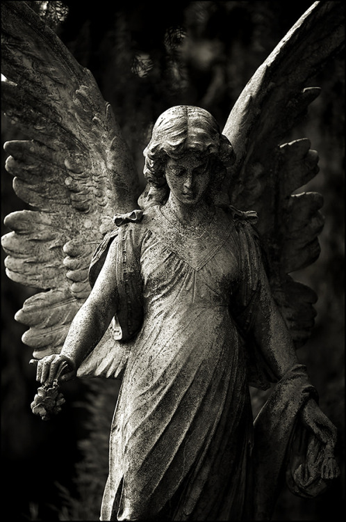 fer1972:  Angel by Osnafotos