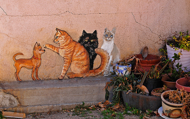 Some More Miami Cats by MarvHansen on Flickr.… and a puppy.  Miami, Arizona, U.S.