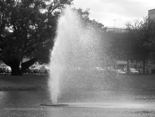myonethousandwords:  water fountain, University of South Florida, Tampa, Florida.