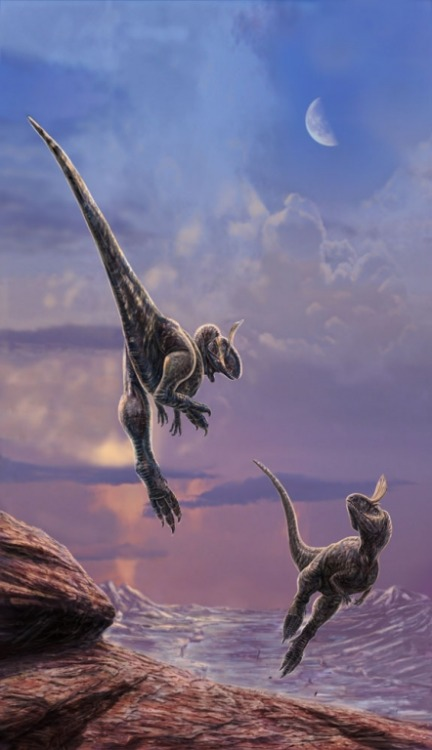 idigdinosaurs:  The Cryolophosaurus ballet is said to be exquisite…