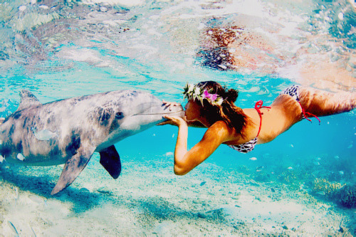 I want to swim with a dolphin.
