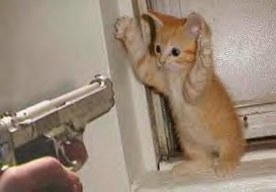 A cat being pointed by a gun , how cute!!!!!!!