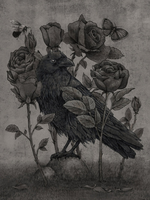 Crows & Roses. What is it about the crow that makes us want more?