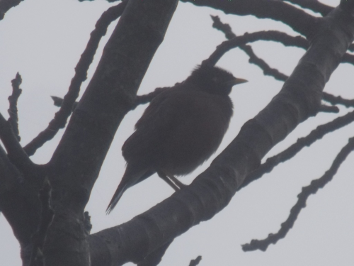 On a misty morning, a bird sits in a tree  Unclear of where to go   Not sure where it came from   Alone, solitary,   The trees around bare as a bone,   And the sound of sirens in the distance   How can one not feel down and  dreary?   But droplets of water on a spider web,   The glistening of the bud of a flower,   And the hopeful sun on this silent,    Golden morning  How can one not see the beauty of this silent moment?