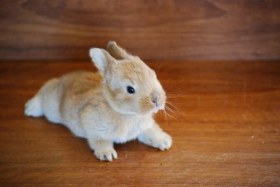 Bunny on it's belly! (via pinterest)