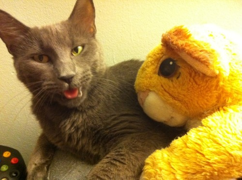 stop that cat. you cannot cuddle with simba. what you think you are going to get in good with the pride and be the next king? well guess what cat you can't because you don't even have a mane.
