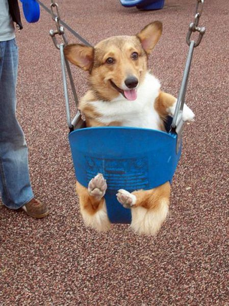 uinyan:  Dogs on Swings