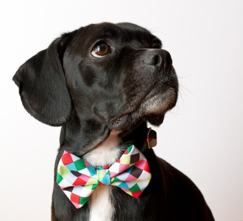 Colorful Cubes Bow Tie Dog Collar by SillyBuddy on Etsy