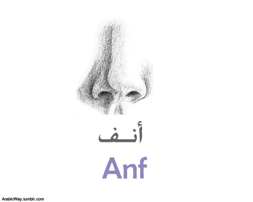 The nose~Al Anf الأنف The noses ~ Al Onof الأُنوف My nose ~ Anfee أنفي  Your nose~ Anfuka (M) أنفـُكَ- Anfuki(F) أنفـُكِ   Her nose ~ Anfuha أنفـُها His nose ~ Anfuhu أنفـُهُ Their noses~ Onofehum(M) أُنوفِهم - Onofehuna(F) أٌنوفـِهن