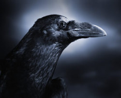 "Don't piss off crows! http://news.discovery.com/animals/angry-crows-memory-life-threatening-behavior-110628.html THE GIST THE ARTICLE  Crows remember the faces of ""dangerous humans,"" with the memories likely lasting for a bird's lifetime. Crows may scold people who threaten them, bringing in relatives and even strangers to mob the person. The crows within mobs then indirectly learn about the person, so they too associate that individual's face with danger and react accordingly. And they will remember you for over 5 years."