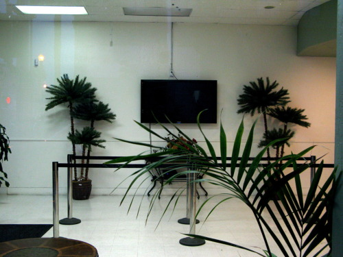 TV and Plants, San Francisco, CA