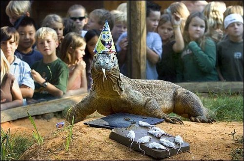 gallagherwitt:   Adding to bucket list: Attend a birthday party for a Komodo dragon.