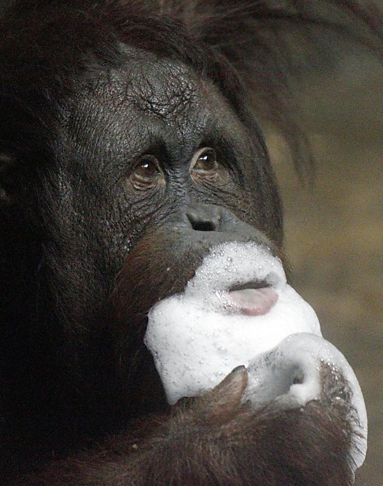 allcreatures:  Photo: Keith Srakocic / AP  Everyone loves a bubble beard.