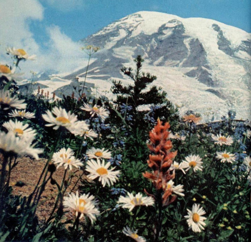 nationalgeographicscans:  July 1966 Mount Rainier (from Sara Gossett's flickr)