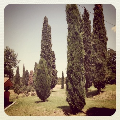 Cypress (Taken with Instagram at Siliano Alto)