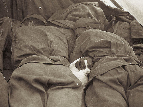 blackandwtf:  1945 Russian soldiers sleeping with a puppy in Prague during World War 2. (via Photo Tractatus)