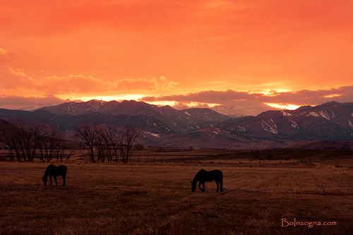 Two Horse Sunset by Striking Photography by Bo (Busy Season) on Flickr.