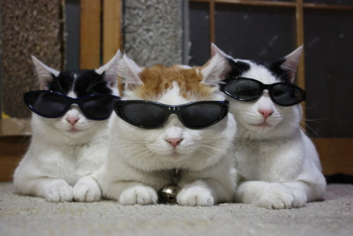 take those off cats. you cannot wear sunglasses you are cats. and anyway even if you weren't cats you can't wear sunglasses inside. only douchebags do that and you are not douchebags cats.