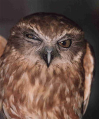 "hungoverowls:  ""There's nothing wrong with my face. My face is fine. How about what's wrong with your shutting the fuck up, huh?"""