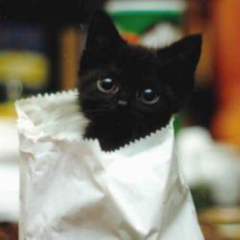 #lolcats #cuteoverload Kitty in a paper bag sees you!