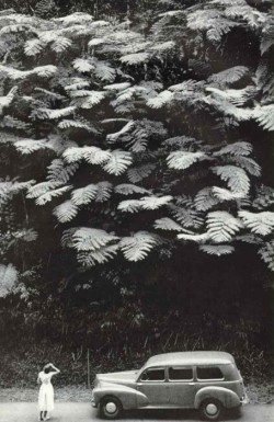 risingobjects:  Look at those ferns.