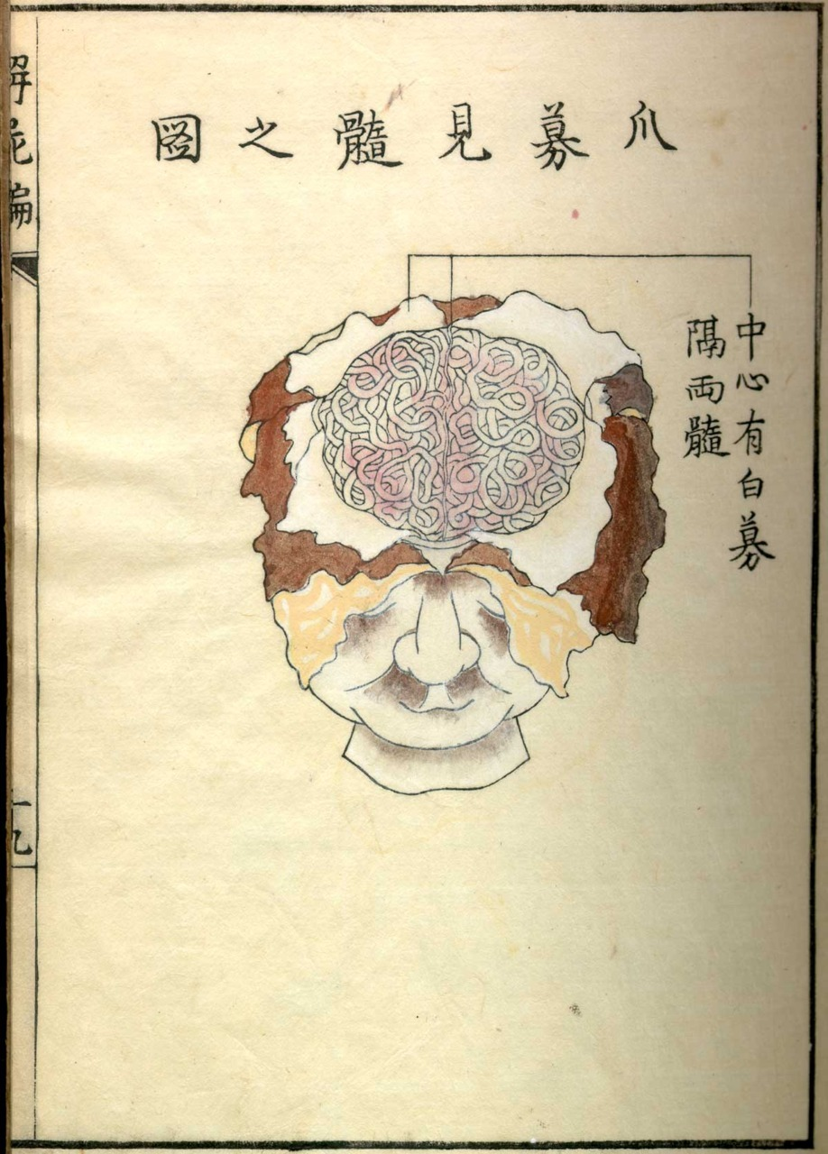From Kaishi hen, Sinnin Kawaguchi (1736-1811). Historical Anatomies on the Web/ National Library of Medicine