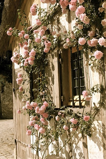 Versailles, rose trellis.  I wish I knew which rose this is, but I don't for certain. However, if I
