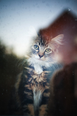 dreamcats:  (by Ellie Rose Harvey)