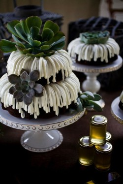 {Succulent} Wedding Cake w/icing