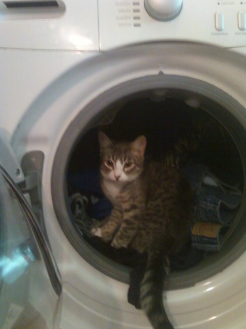 get out of there cat. you are not dirty laundry and you do not belong in a washing machine. you will definitely not enjoy all the water and spinning if you do get stuck in there. you clean yourself with your tongue not with detergent and water.