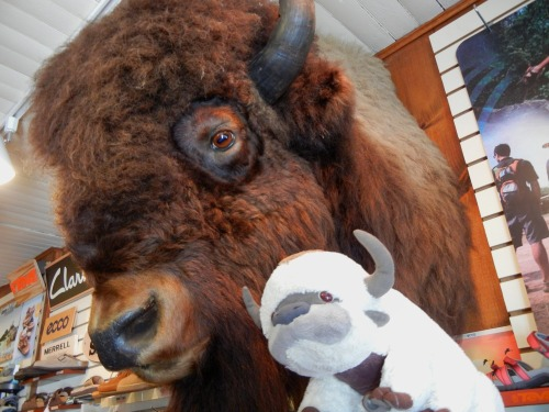 APPA SPENT THE WEEKEND VISITING HIS GREAT-GREAT-GRANDBISON. BOOOAHHHHHWRRRRR.